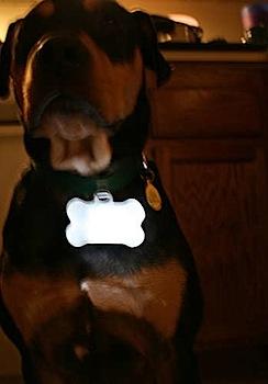 Glow bone dog collar attachment