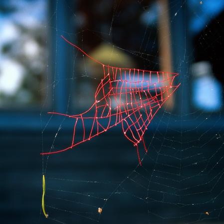 Artist repairs spiderwebs