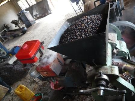 Village bio-diesel in Sierra Leone
