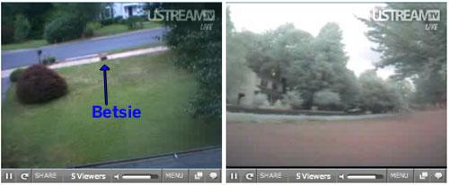 Lawnbott mows live on the web!