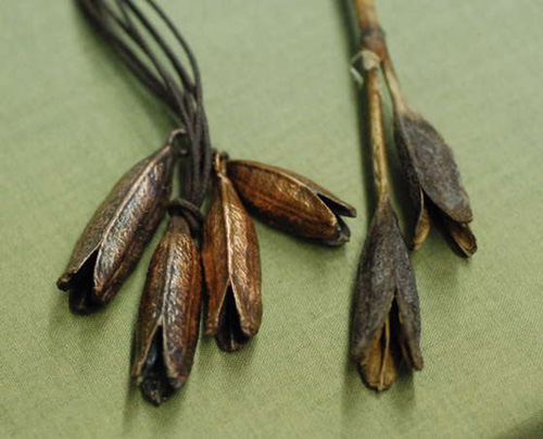 Electroforming an Iris Seed Pod