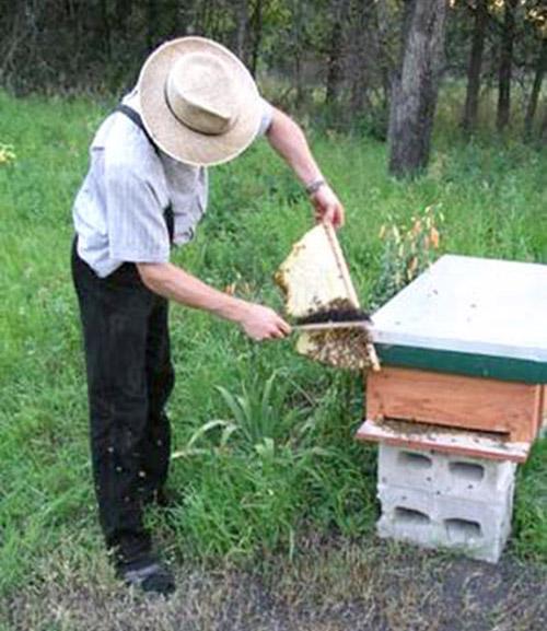 DIY: Bee Keeping