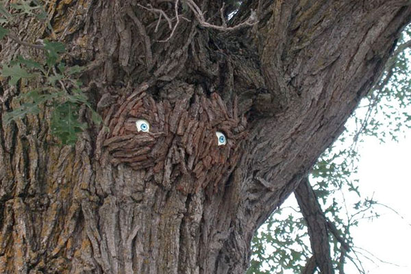 More trees with eyes!