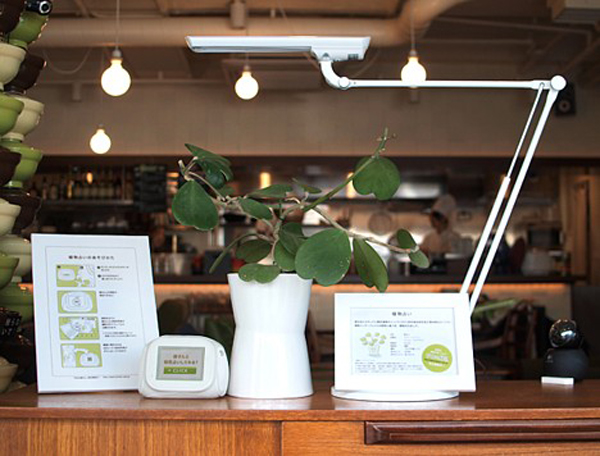 System lets your plants blog their daily existence