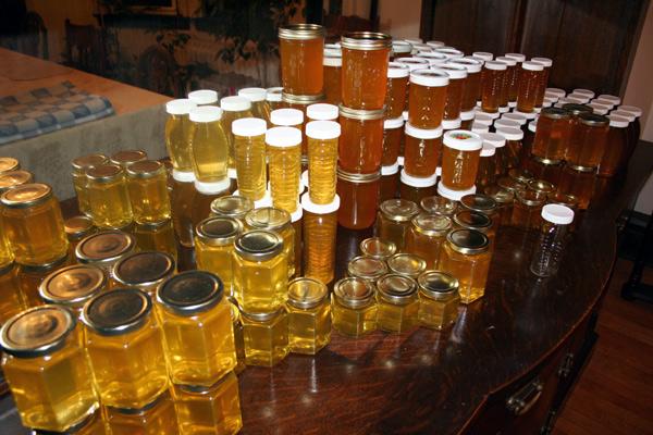 Backyard beekeeping – 120 pounds of honey