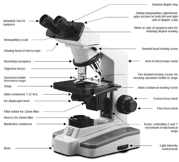 Compound Light Microscope Diagram Product Wiring Diagrams