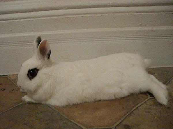 Pet Spotlight: Kayte Terry's Rabbit, Potato