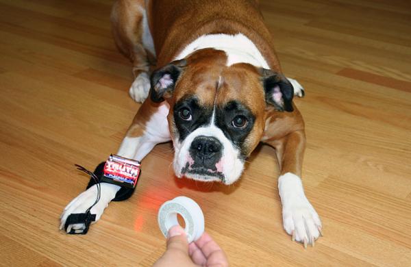 Dog days of summer sale: Truth Wrist Band kit