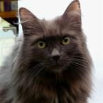 Pet Spotlight: Diane Gilleland's Cat Pushkin
