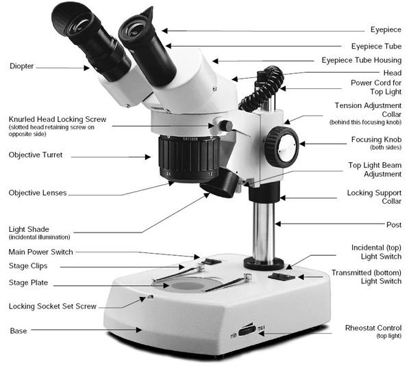 Choosing A Microscope Make Diy Projects And Ideas For
