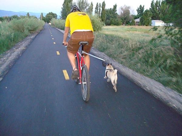 How-To: Bike dog walker