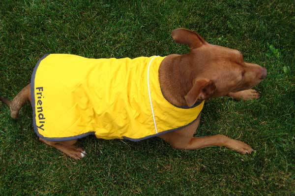 How To: Dog Coat from a Recycled Jacket