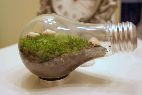 Lightbulb terraria
