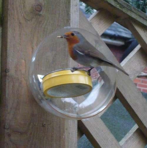How-To:  Elegantly simple squirrel-proof bird feeder
