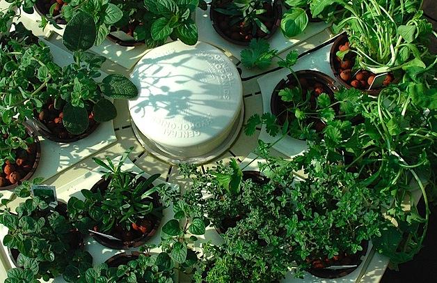 CRAFT Video: Hydroponic herb garden