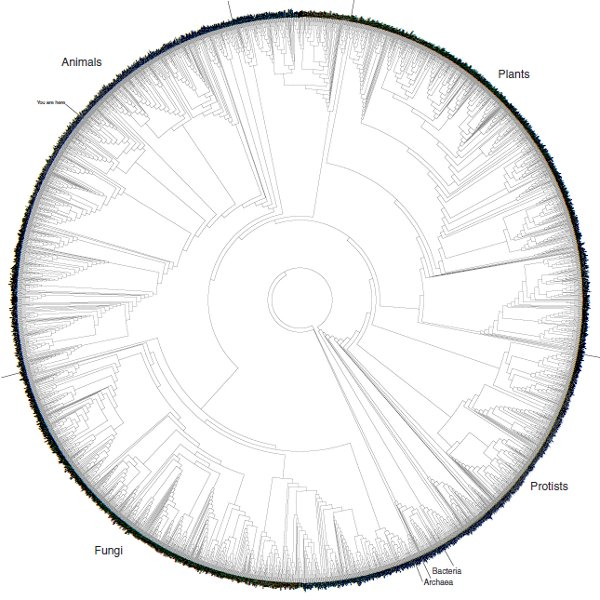 "Massive printable ""Tree of Life"" graphic for free download"