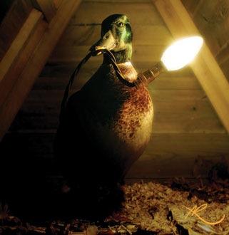 Taxidermy lighting