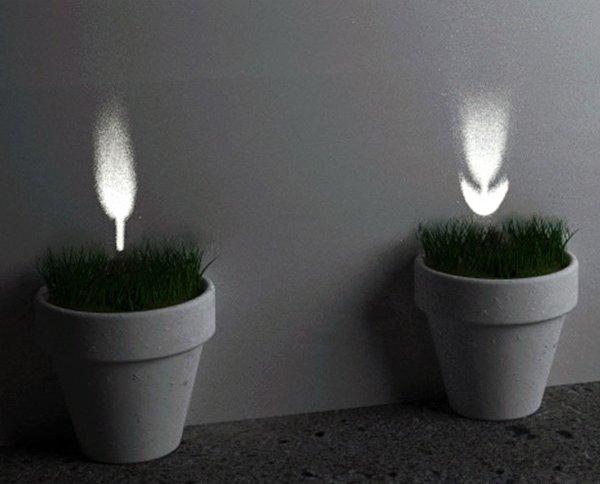 Light plant brighter, presumably harder to kill than regular plants