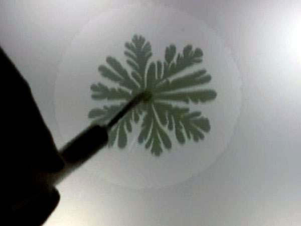 Simple Hele-Shaw Flow Demo Produces Beautiful Organic Forms