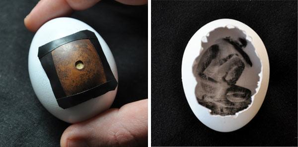 Pinhegg: An Egg Pinhole Camera