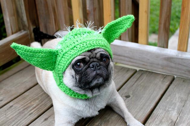 Pickles the Pug Crochet Hat Model