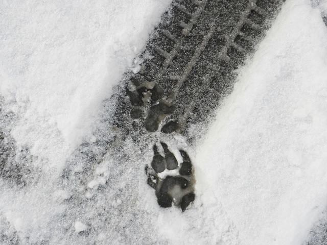 Shoes That Leave Animal Tracks
