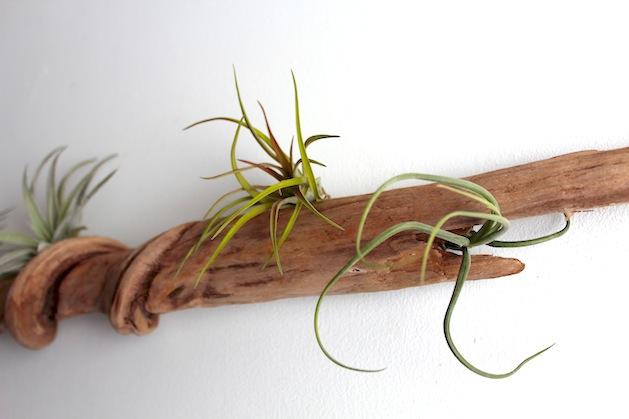 How-To: Driftwood Wall Garden