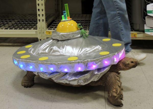 DIY Tortoise Costume