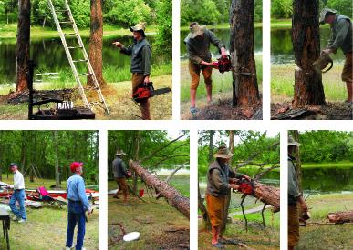The Widowmaker: Cutting Down a Tree