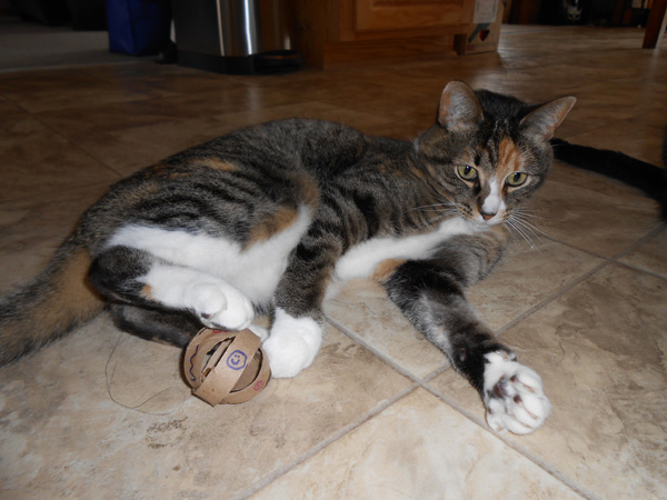 How-To: DIY Cat Toys from Toilet Paper Rolls