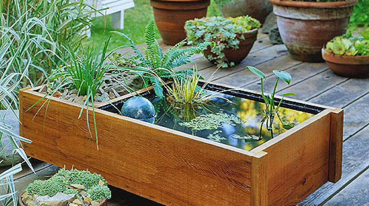 How-To: Small Space Water Garden