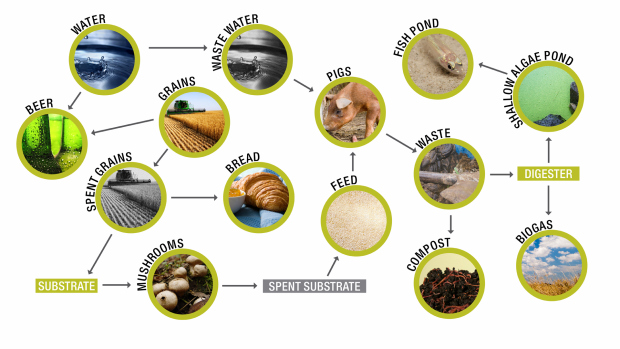 Emulating Ecosystems: A Story About Beer