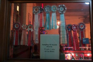 Some of the many Pratt Cat awards.