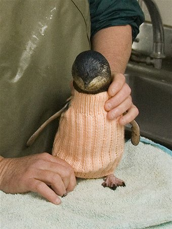 A Global Call for Penguin Sweaters