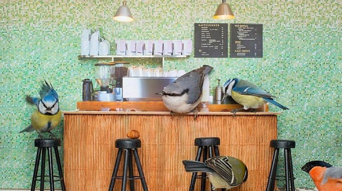 Live Streaming Coffee Shop Bird Feeder in Norway