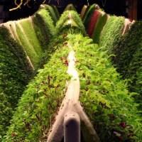 aeroponic-farm