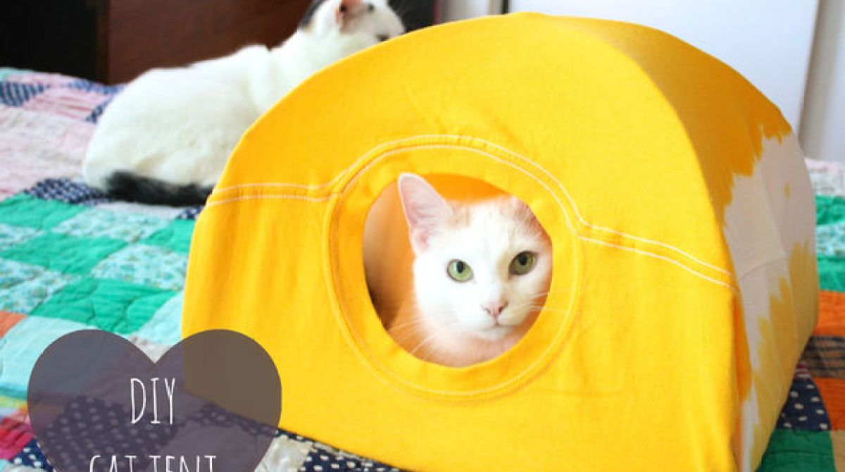 How-To: Cat Tent from a T-Shirt