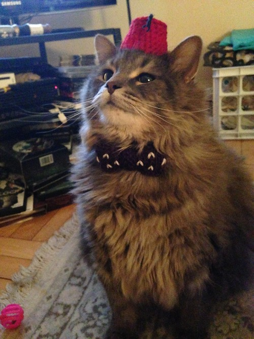 A Cat Wearing A Dr. Who Fez And Bow Tie