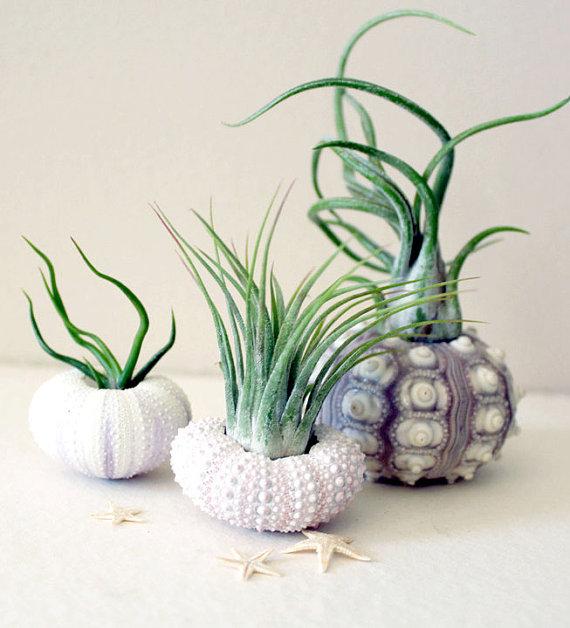 Air Plant Sea Urchin Planters