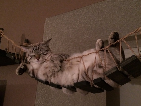 Homemade Indiana Jones Cat Bridge
