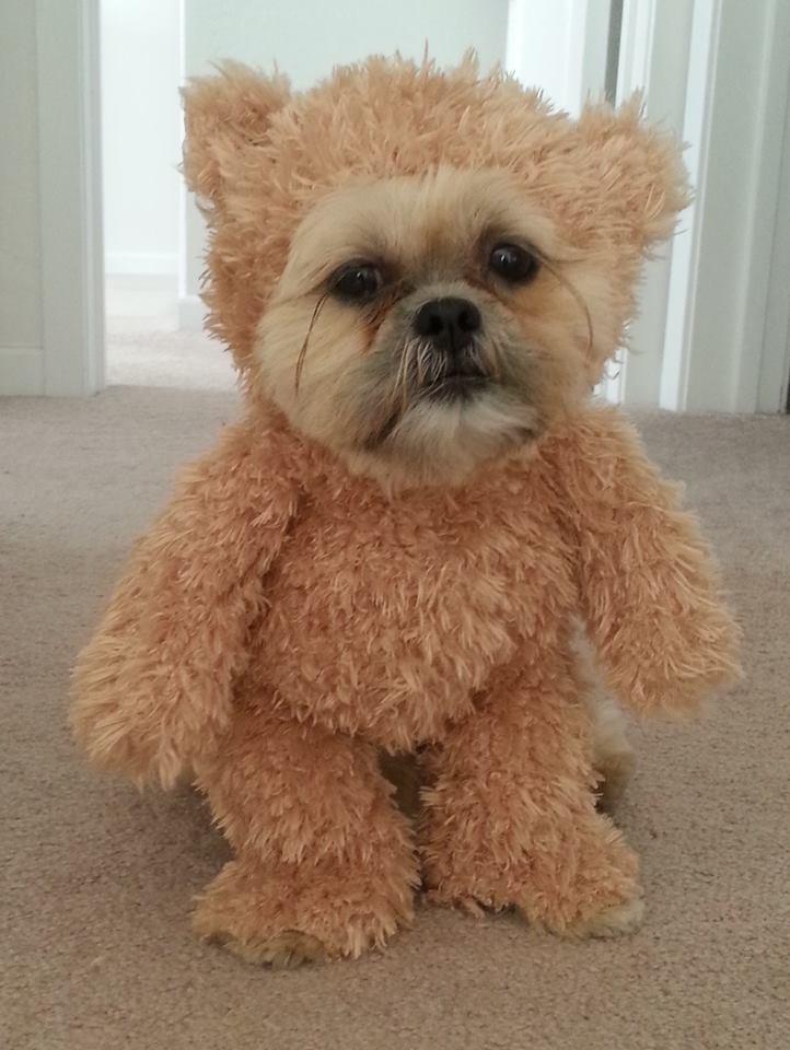 walking teddy bear dog costume