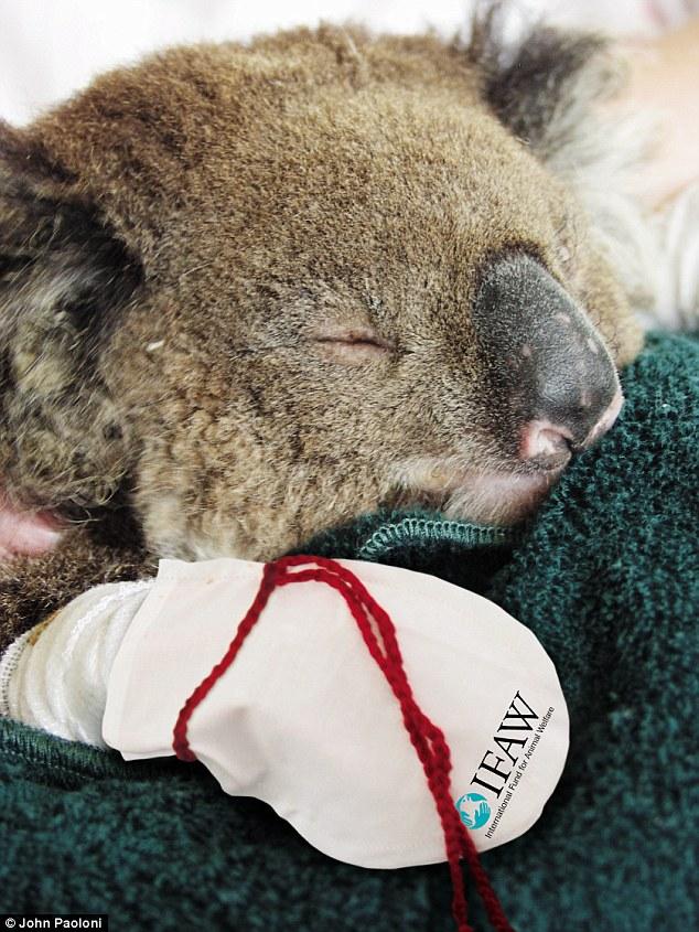 Call for Koala Mittens