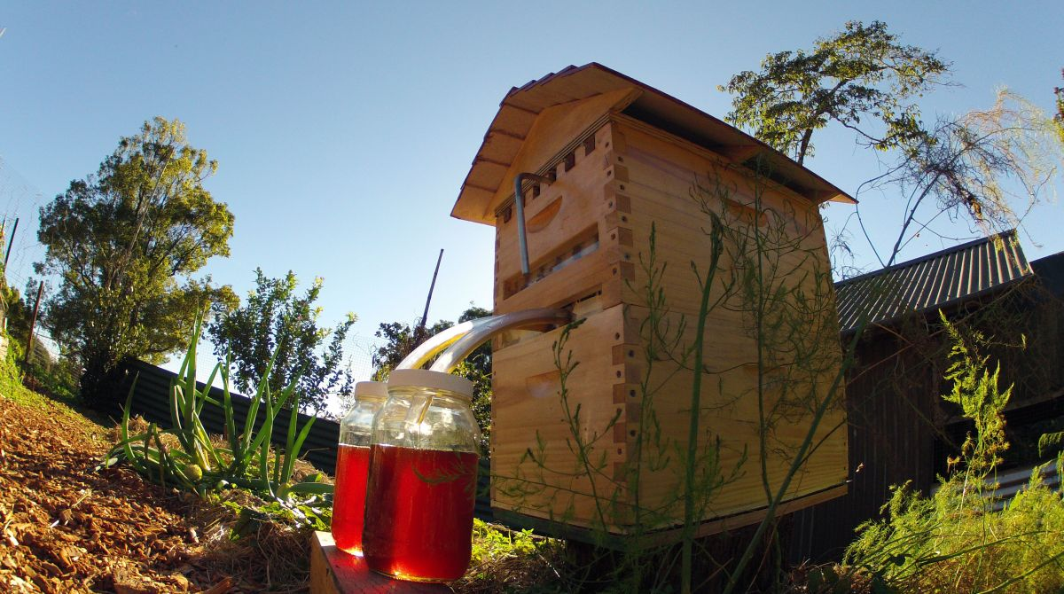 Ingenious Hive Design Gives You Honey on Tap