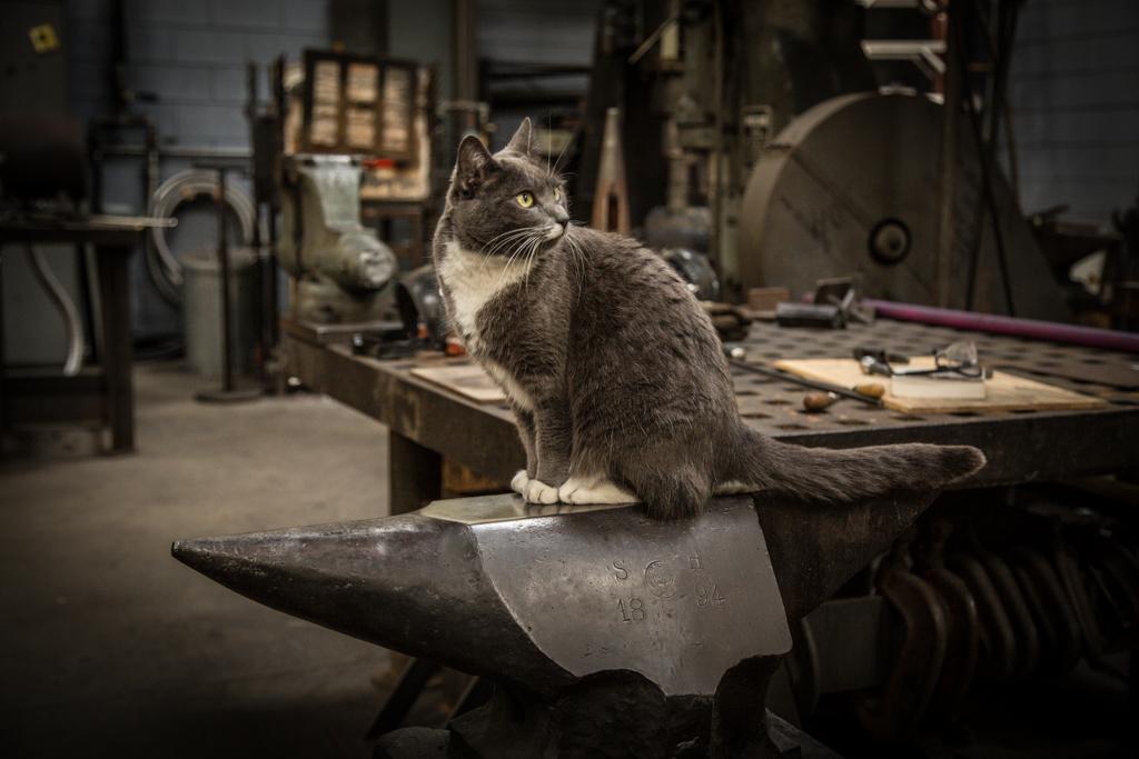 From Chemist to World Renowned Blacksmith: James Austin