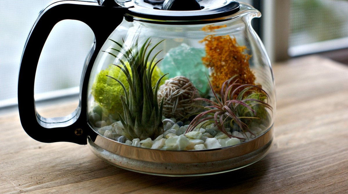 Pour Yourself A Cup Of Home Decor With This Coffee Pot Terrarium