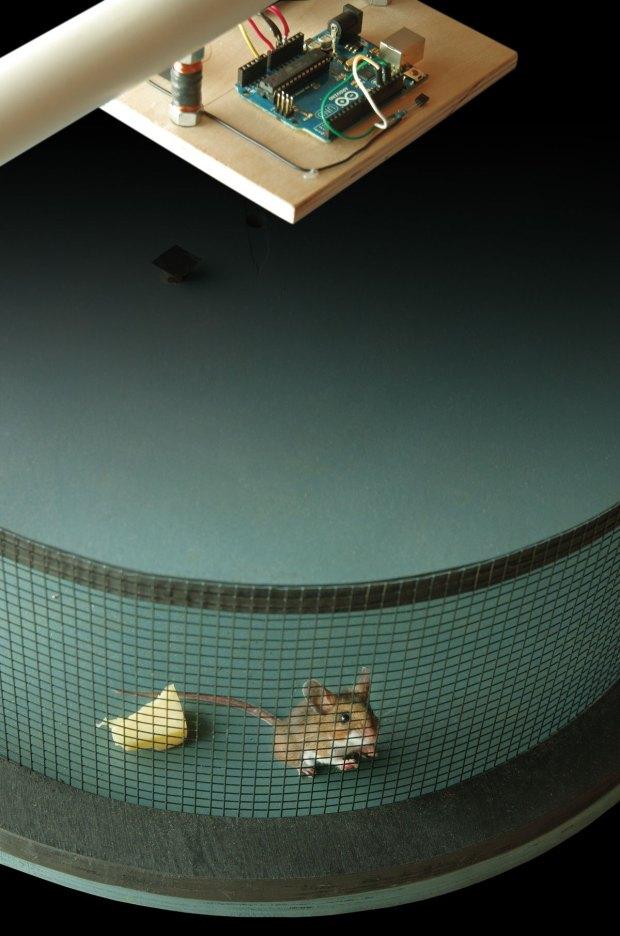 Smart Rat Trap Arduino + desperation = 21st-century rodent control