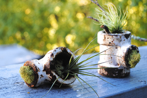 New life grows from unusable objects Photo: bookfinch/flickr