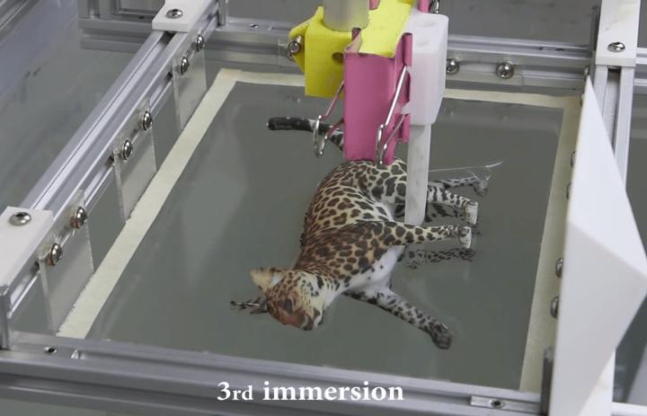 CatDipping