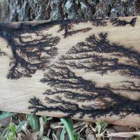 fractal wood burning finished