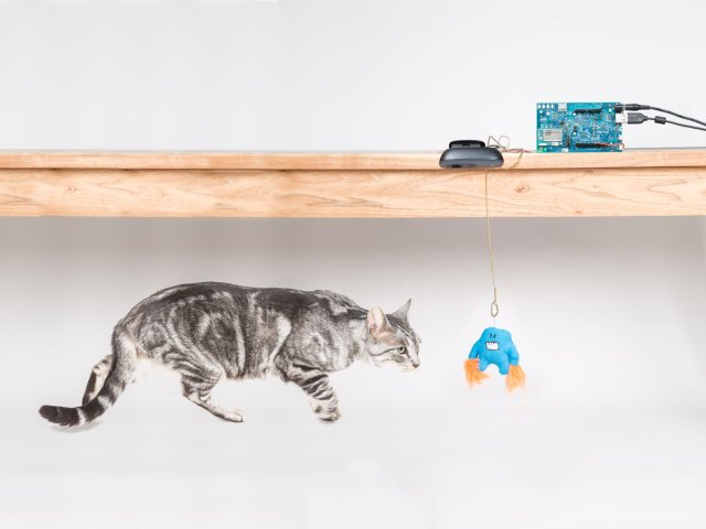 Internet Of Cats with Intel Edison